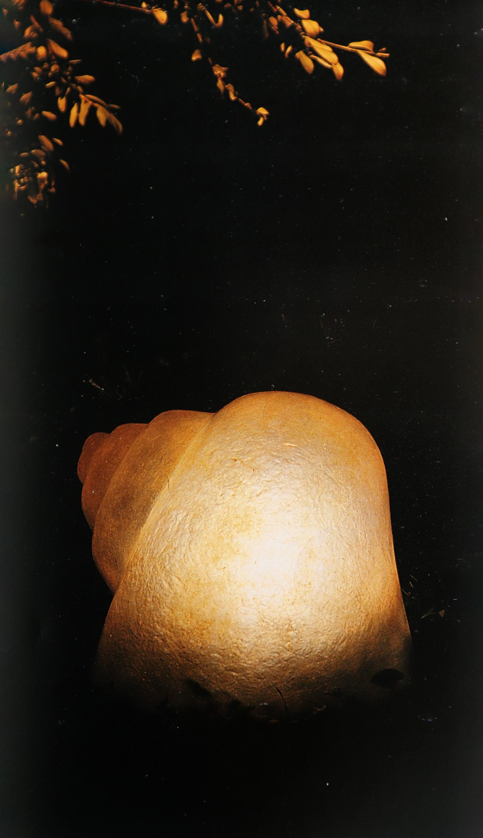 Sergio Camilli Snail Lamp for Bieffeplast, Italy, 1974image 4